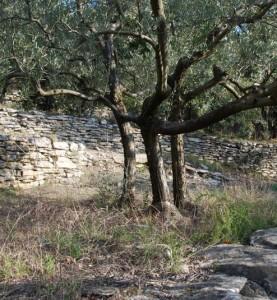 goult-terrasses